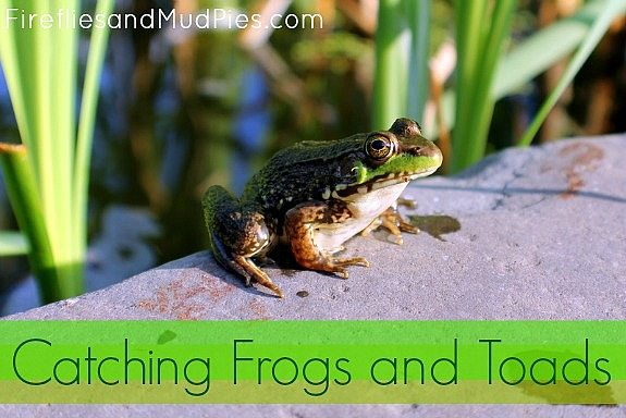 Catching Frogs and Toads - Fireflies and Mud Pies