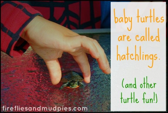 baby turtles are called hatchlings