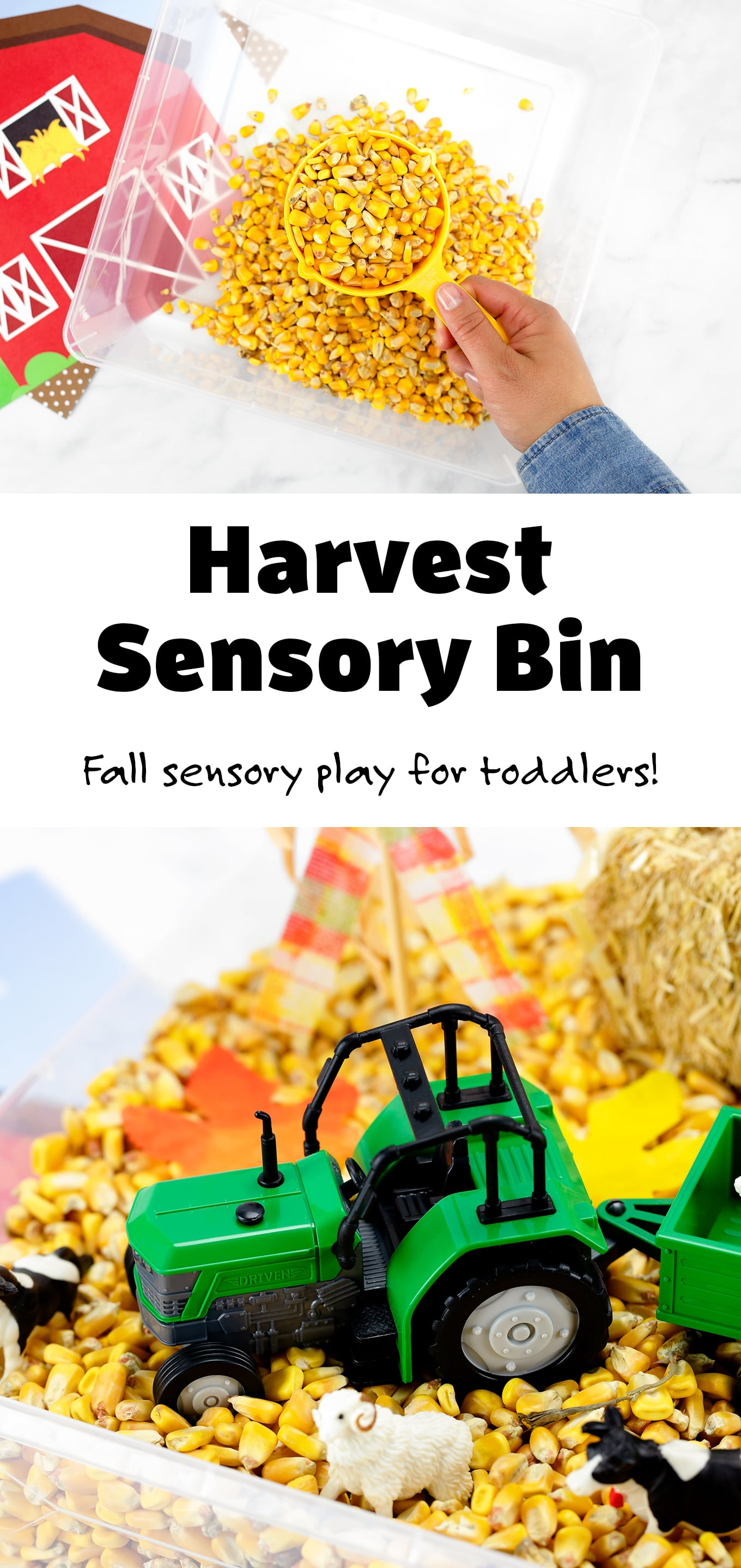 This Harvest Sensory Bin is a fun way for toddlers, preschoolers, kindergartners, and older kids to explore textures and practice fine-motor skills! #harvest #sensorybin #fall #toddlers #kids #preschool via @firefliesandmudpies