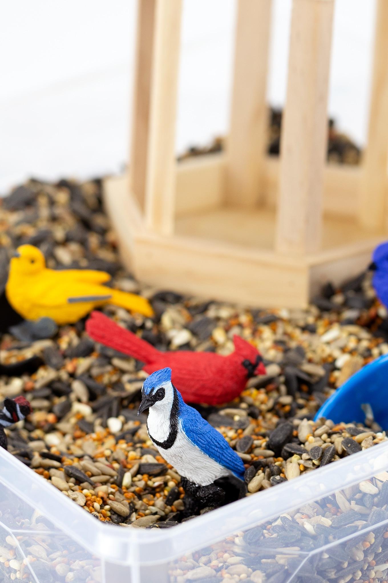 Bird Sensory Bin for Kids