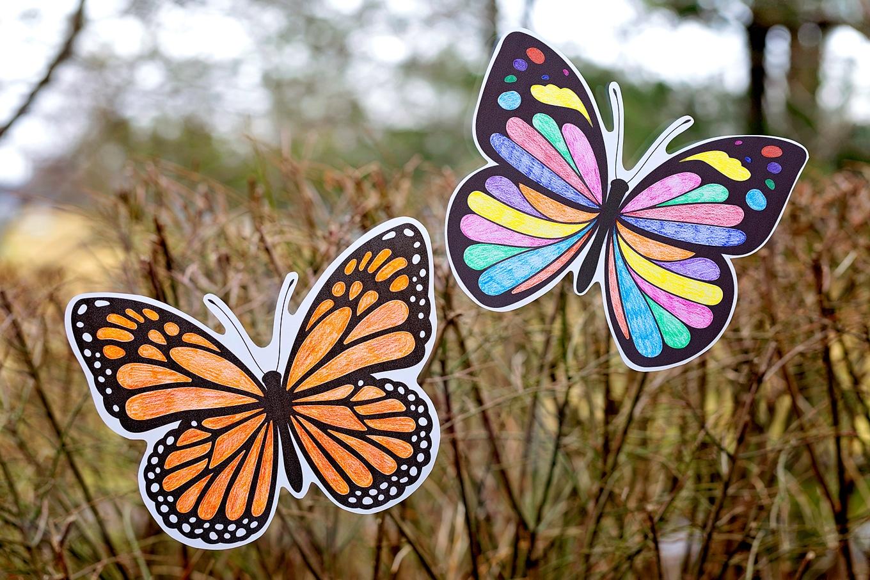 Two Butterfly Suncatchers on a Window
