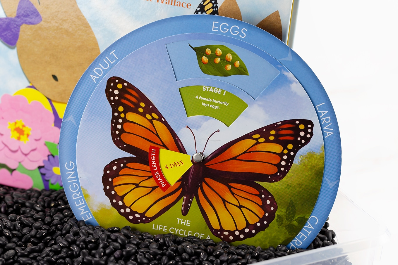 Monarch Butterfly Life Cycle Wheel