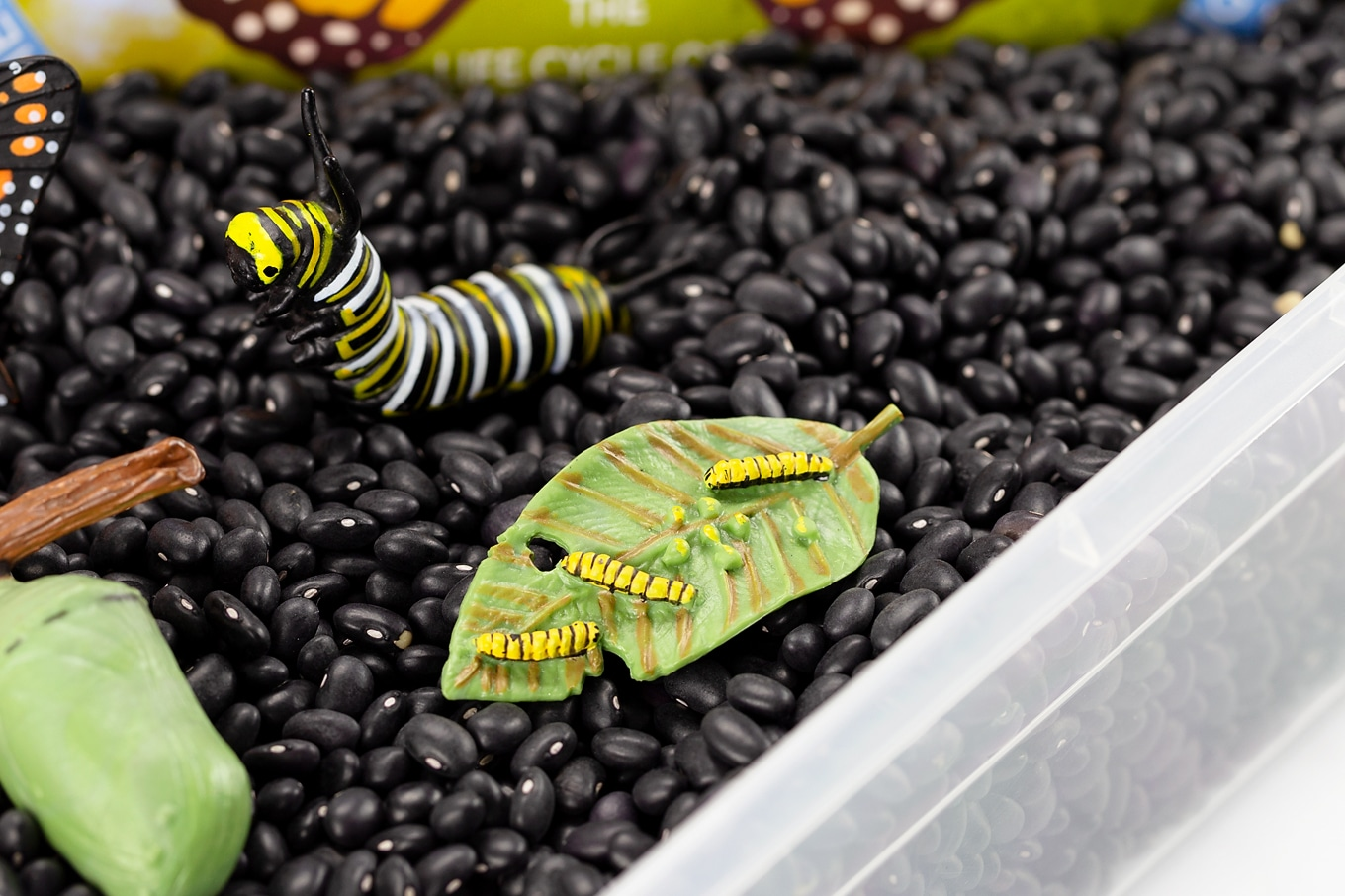 Monarch Butterfly Life Cycle Toys