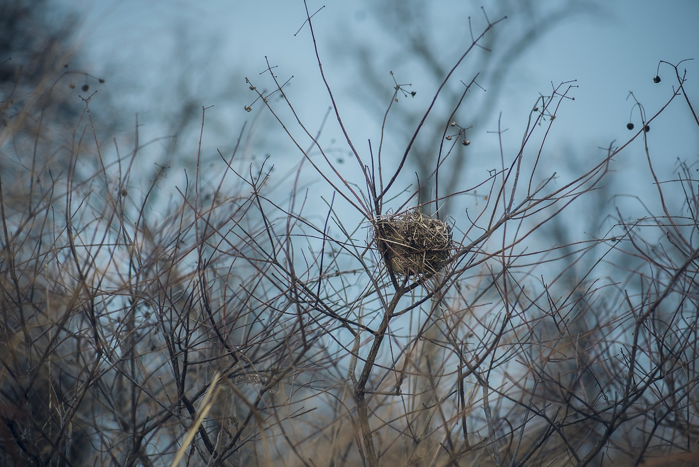 Bird Nest on Nature Walk