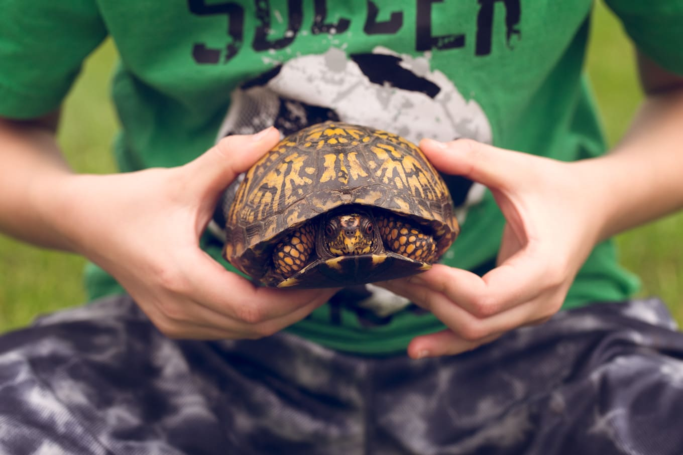 Boy Holding Box Turtle