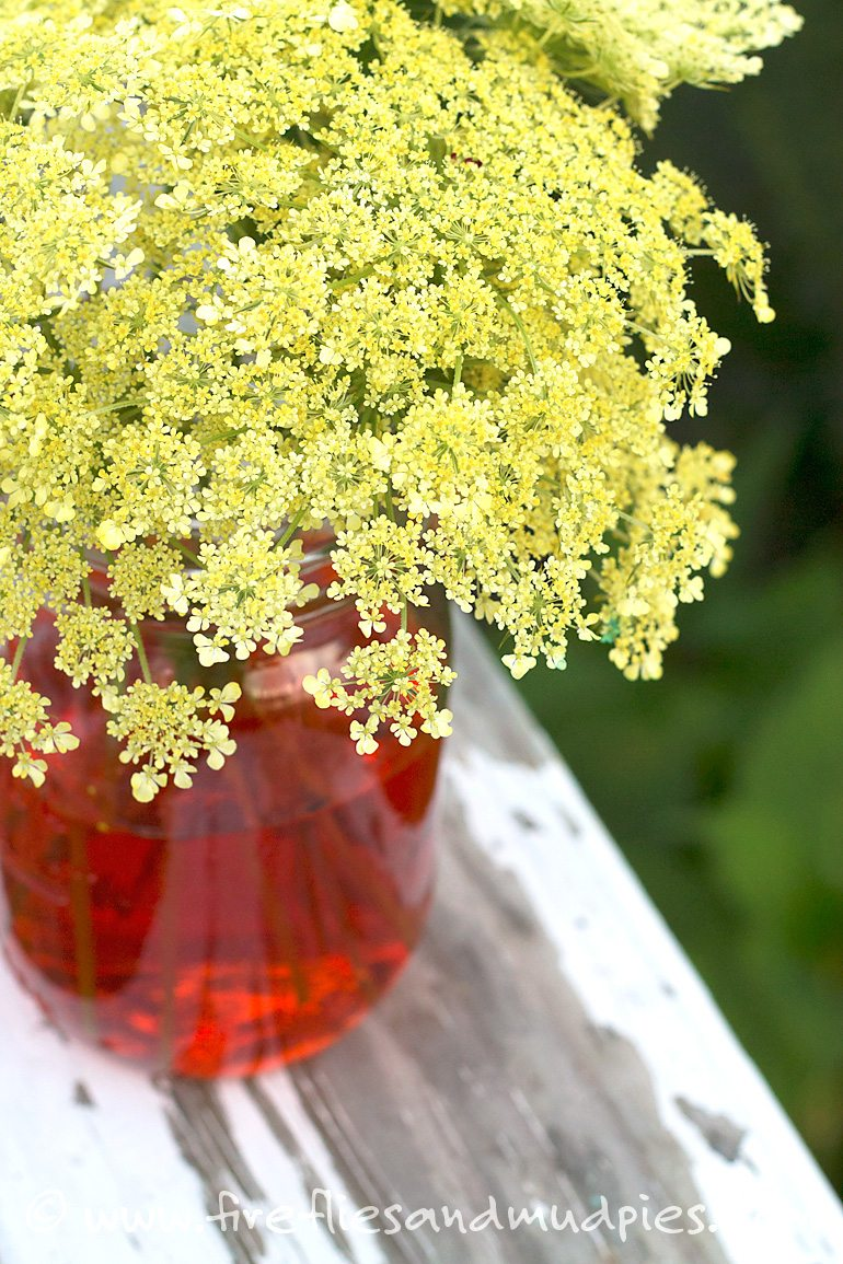 """Coloring """"Wild Carrot"""" is a fun science activity for kids! 