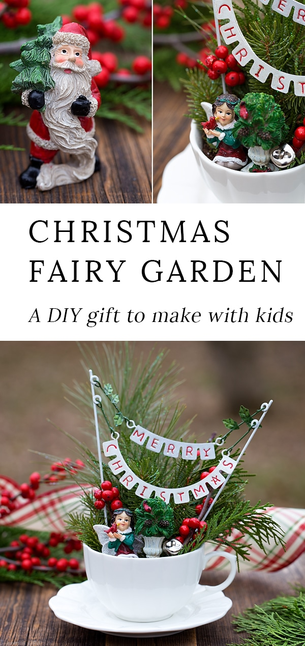 Learn how to make a DIY Christmas Fairy Garden with plants, accessories, and pine sprigs in a teacup. It's a fun homemade gift idea to make with kids. #fairygarden #christmas #kids via @firefliesandmudpies