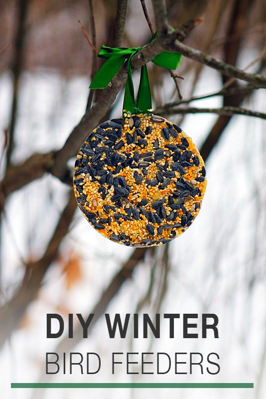 DIY Winter Bird Feeders