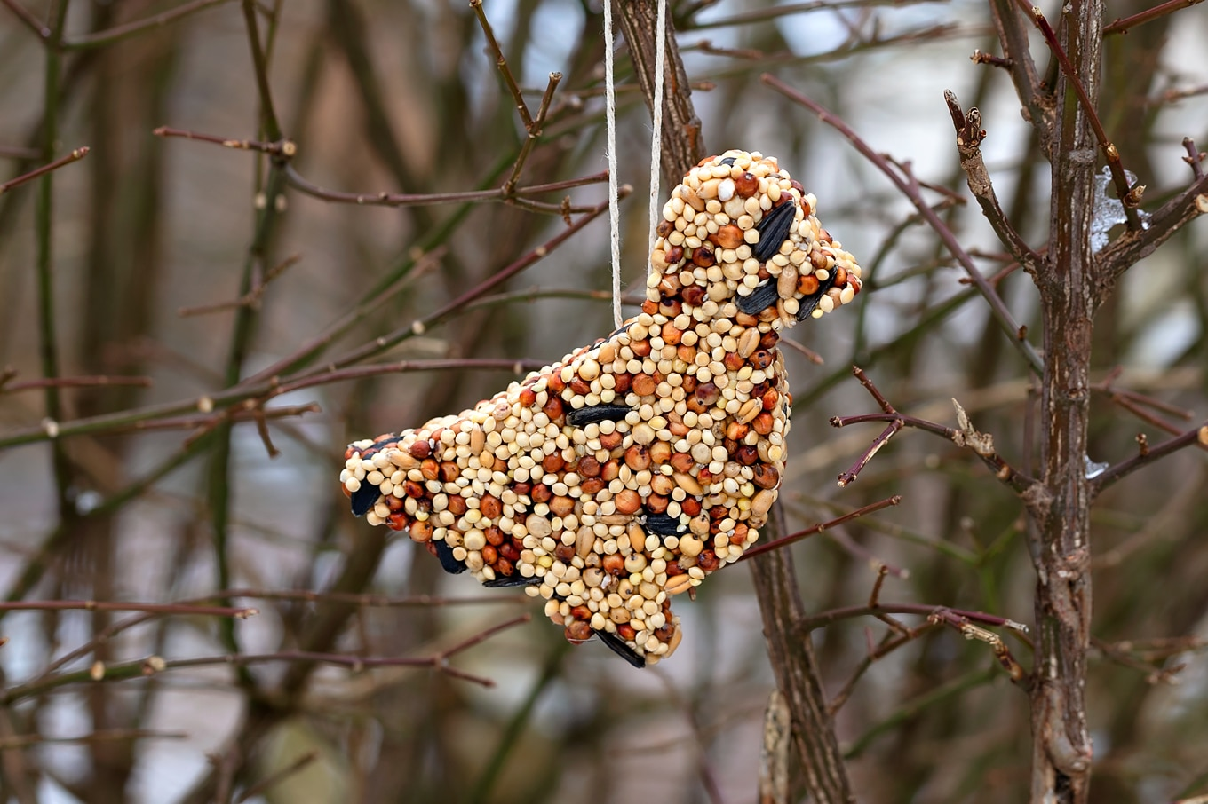 Bird-Shaped Birdseed Feeder DIY