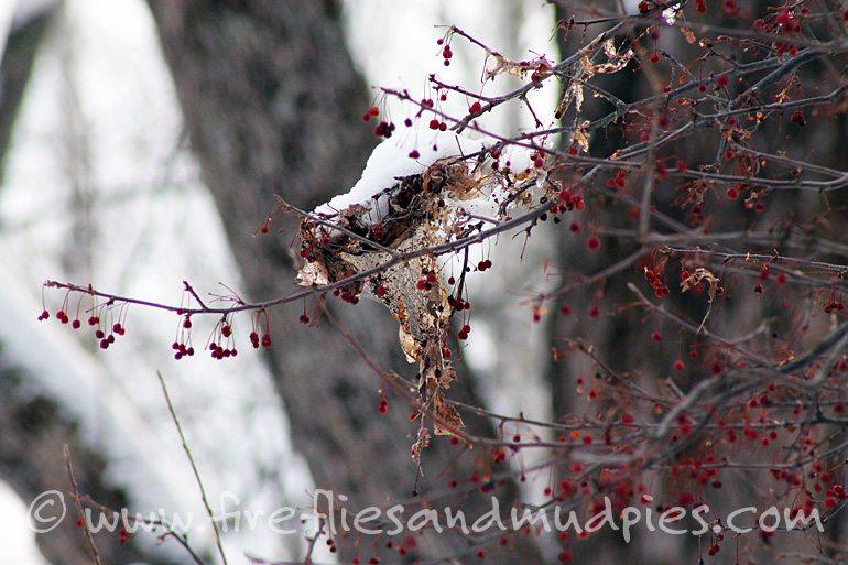Ragged Gypsy Moth Nest | Fireflies and Mud Pies