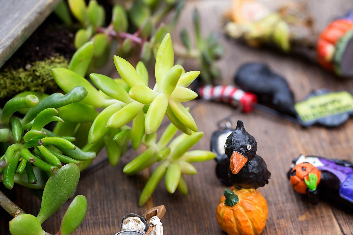 Halloween Teacup Garden Accessories