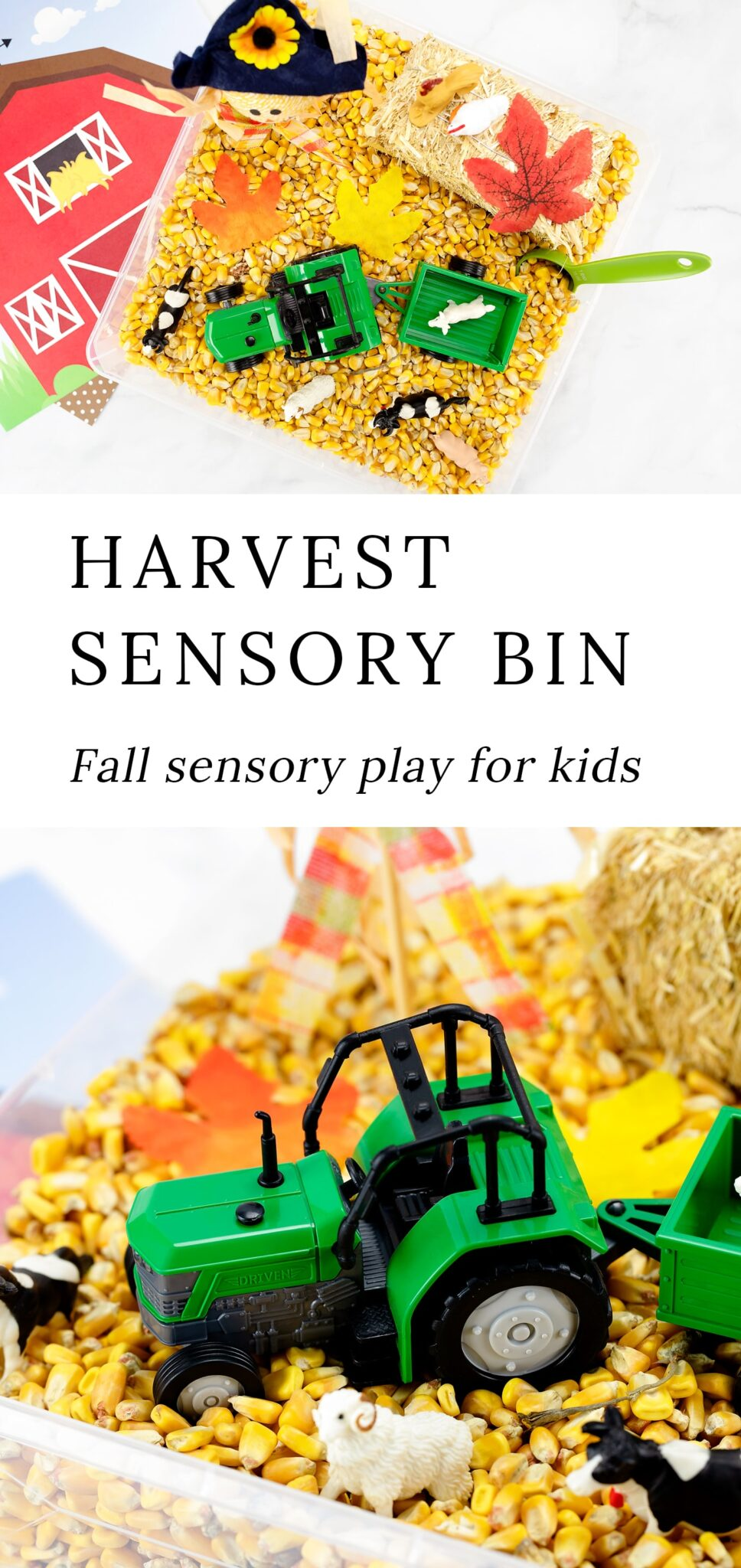 This Harvest Sensory Bin is a fun way for toddlers, preschoolers, kindergartners, and older kids to explore textures and practice fine-motor skills! #harvest #sensorybin #fall #toddlers #kids #preschool via @firefliesandmudpies