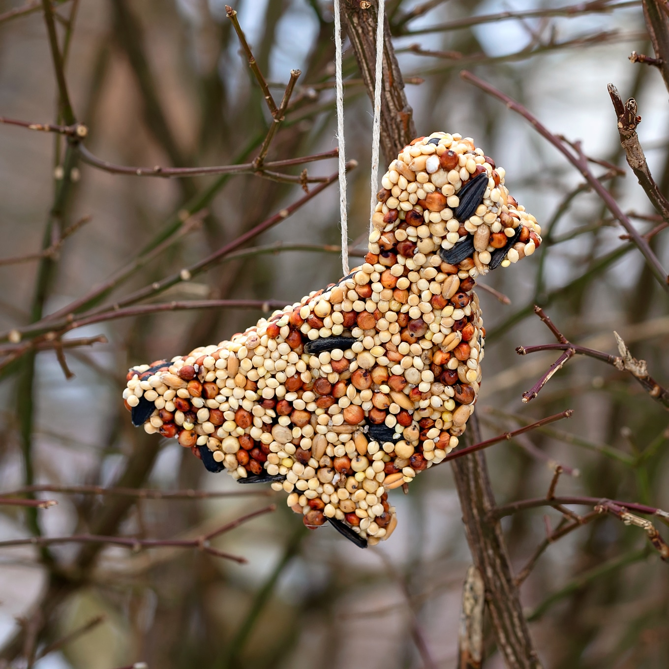 Easy and Fun Birdseed Ornaments