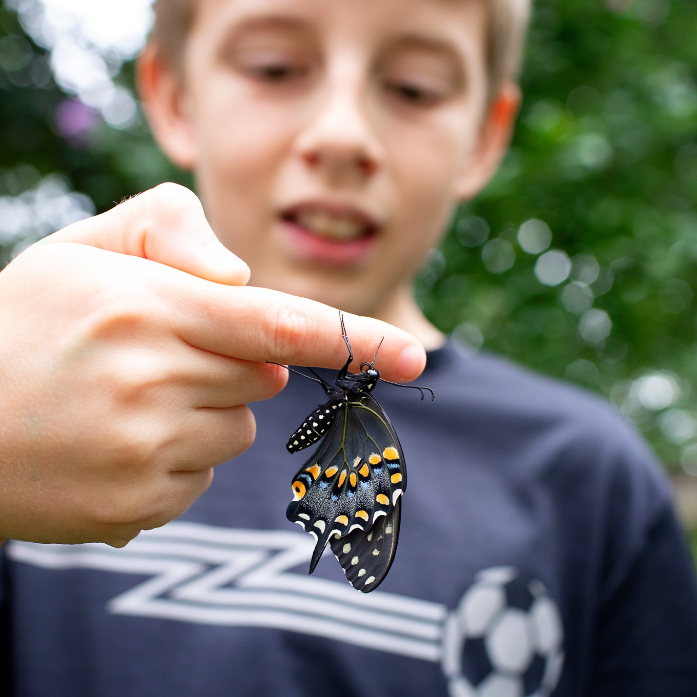 Child Holding Black Swallowtail Butterfly