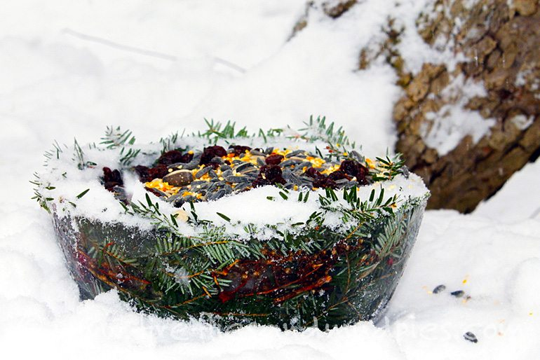 Ice Bowl Bird Feeder | Fireflies and Mud Pies