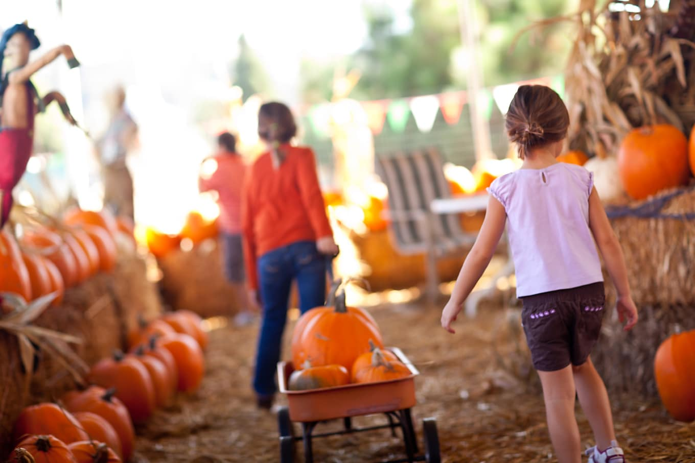 Children Picking Pumpkins
