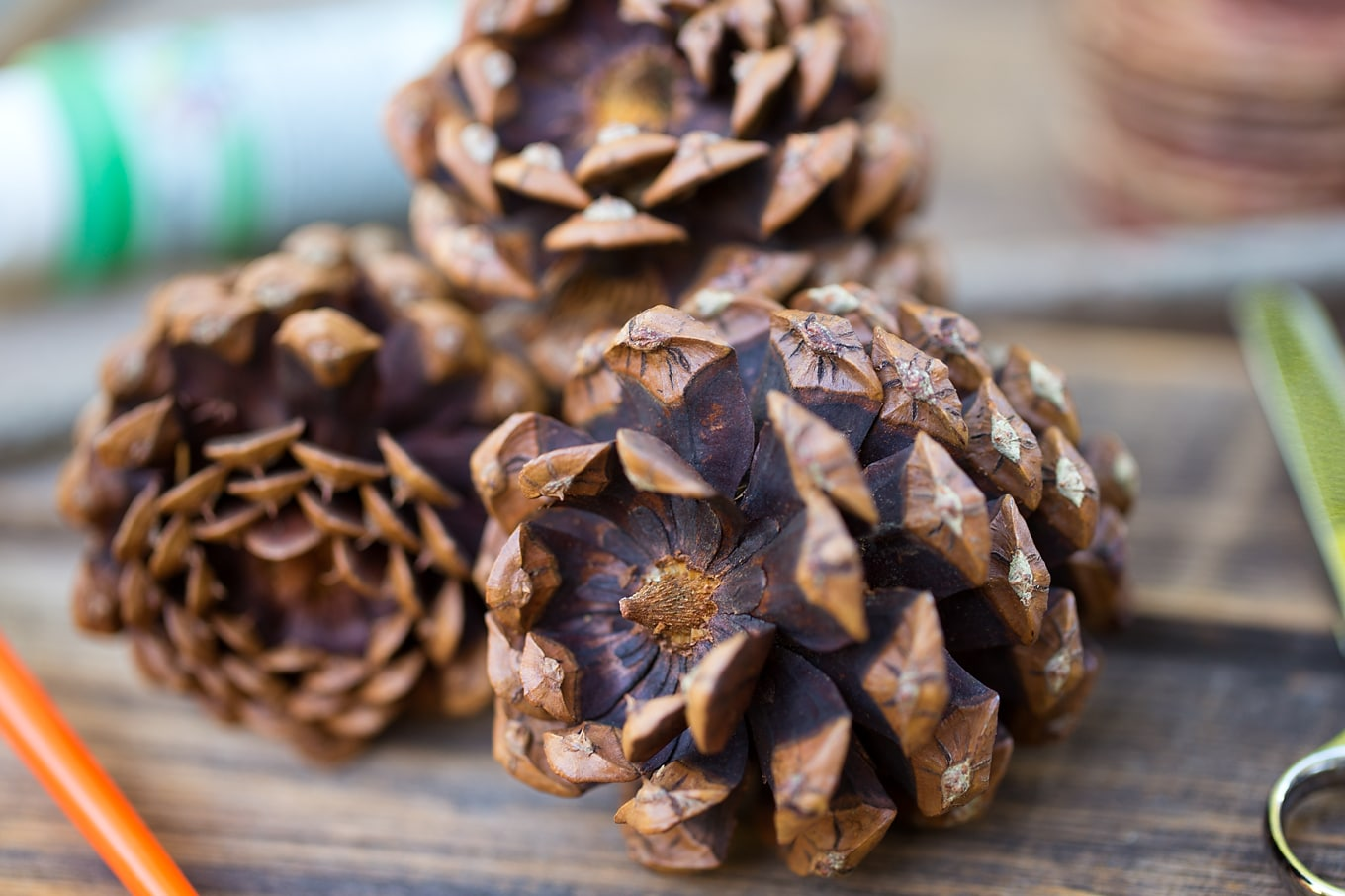 Pine Cones for Nature Craft