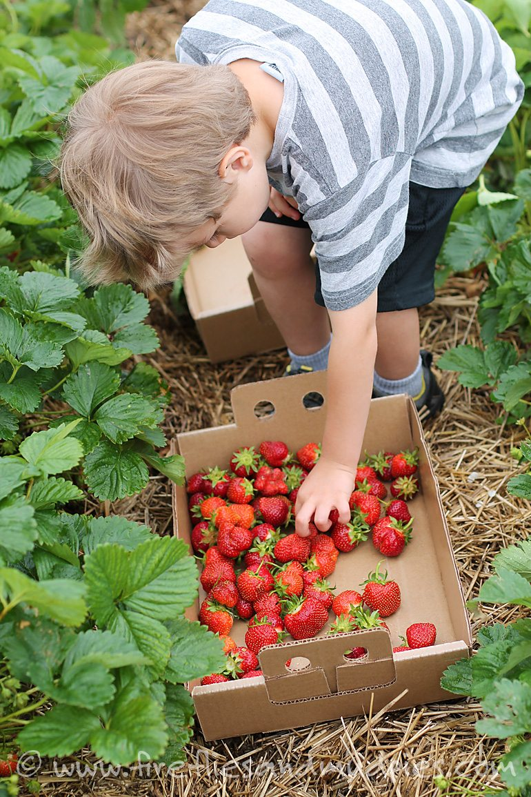 Go strawberry picking for awesome summer fun! | Fireflies and Mud Pies