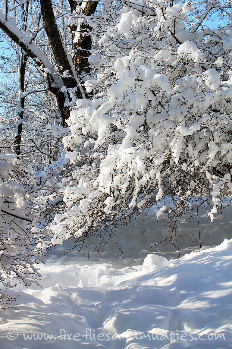 Snow Covered Trees on a Winter Nature Hike | Fireflies and Mud Pies
