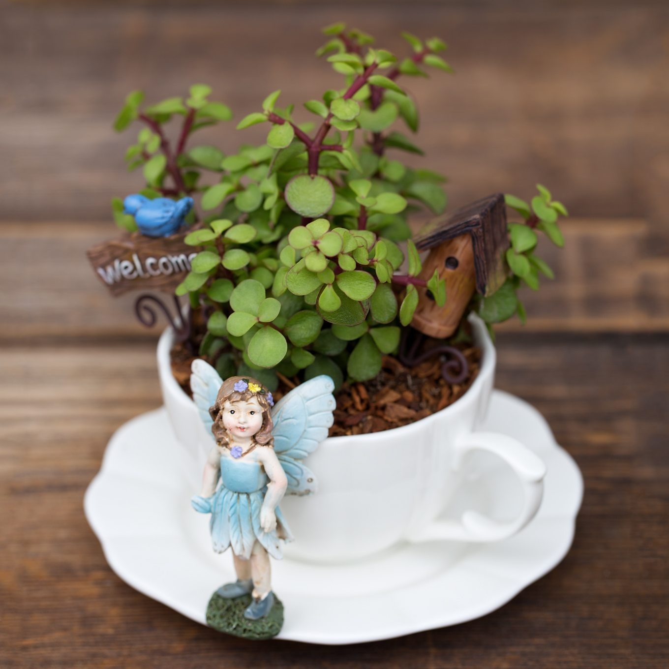 Bring The Magic Of Fairies Inside Your Home With A Miniature Teacup Fairy  Garden. Perfect