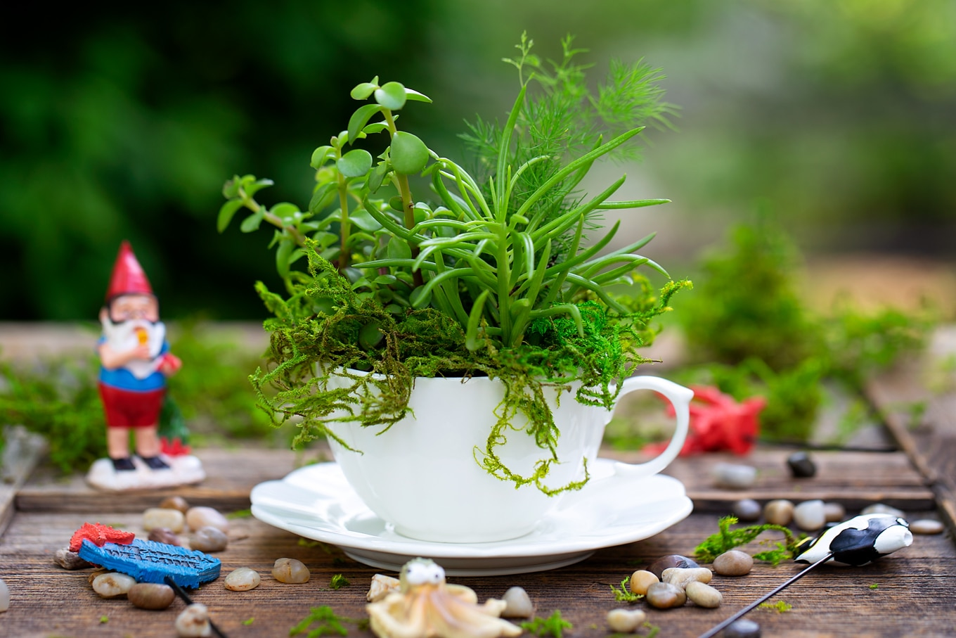 White Teacup Filled with Succulents and Moss
