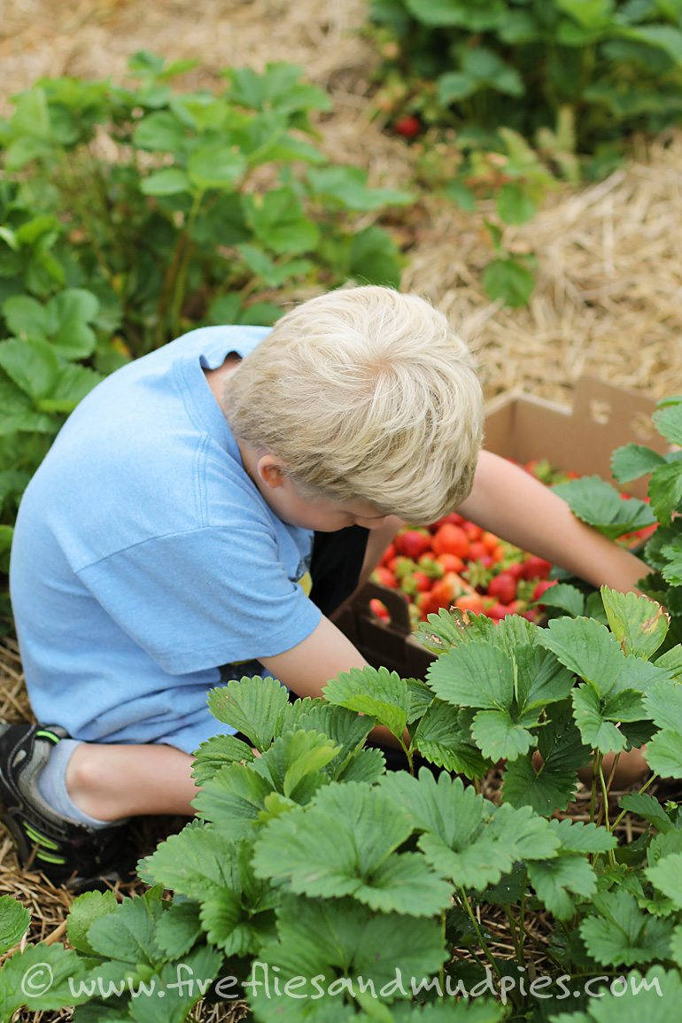 Take the family strawberry picking for great summer fun!   Fireflies and Mud Pies