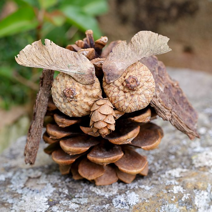 Pinecone Owl: A Fall Nature Craft for Kids