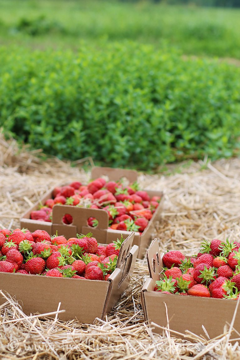 Take the family strawberry picking!   Fireflies and Mud Pies
